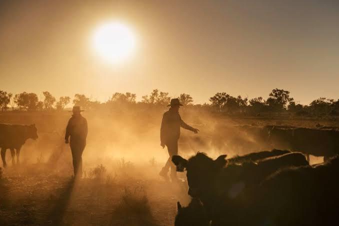The Best Government Spending plan Affirms NRAS Subsidizing for Australian Land Speculators